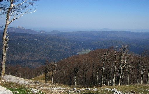 Ogulinske šume
